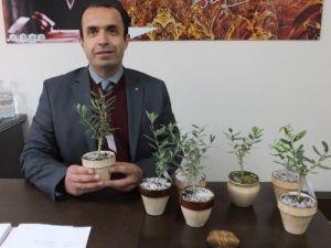 Burhaniye'de Annelere Çiçek Yerine Zeytin Ağacı Hediye Edildi