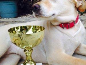 Marmaris'te Köpekler Podyuma Çıktı