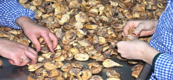 Aydın 3,8 milyon kuru incir ihraç etti