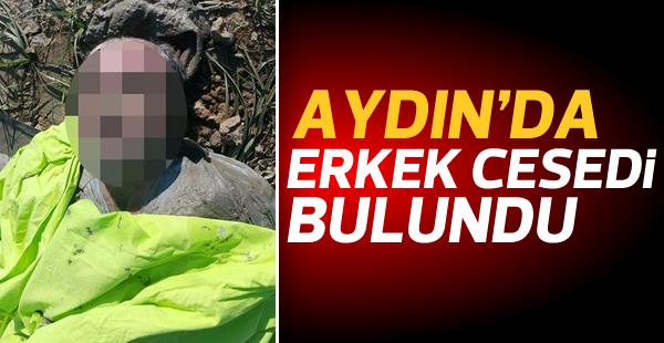 Aydın'da kimliği belirsiz ceset bulundu