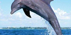 Balıkçılara uyarı: 'Yunus avı yasak'