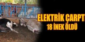 Elektrik Çarptı 18 İnek Öldü
