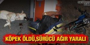 Köpek öldü,sürücü ağır yaralı