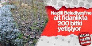 Fidanlıkta 200 çeşit bitki yetiştiriliyor