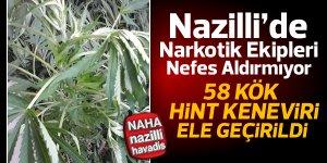 Nazilli'de hint keneviri ile mücadele devam ediyor