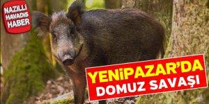 Yenipazar'da domuz savaşı