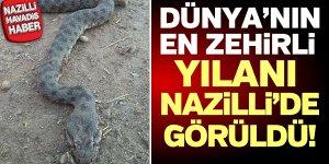 Dünya'nın en zehirli yılanı Nazilli'de öldürüldü