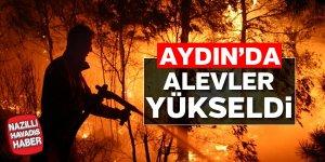 Aydın'da orman yangını